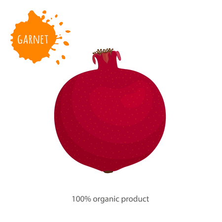 Whole pomegranate fruit on a white background. Vector garnet in cartoon style. Banner on the topic of food and health.