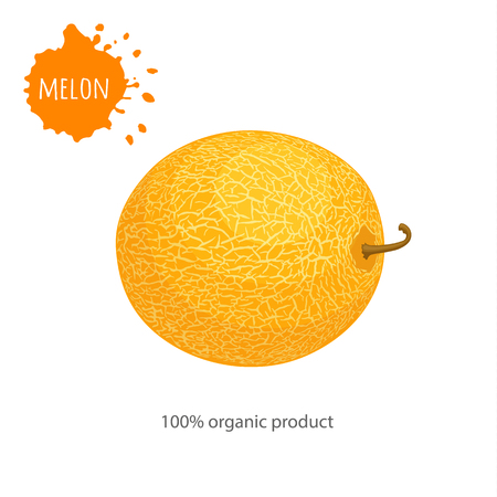 Yellow vector melon isolated on white background. Template for advertising healthy food.