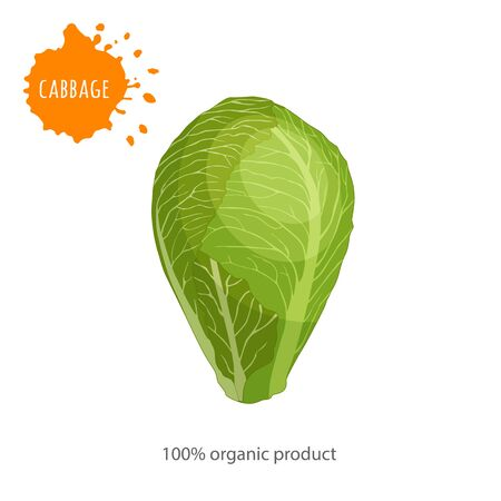 Cabbage close up. Advertising organic vegetables. Vector illustration.