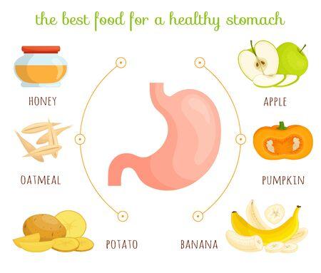 Produits de l'estomac. Illustration vectorielle. Régime pour un estomac sain.