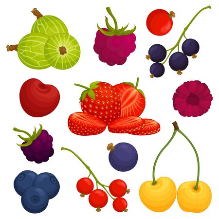 Composition of various berries. Vector illustration. Set of elements