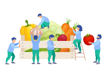 A team of people puts vegetables in a box. Sorting, packaging and delivery of fresh organic food. Vector illustration in flat style. Assembling an order by company employees.