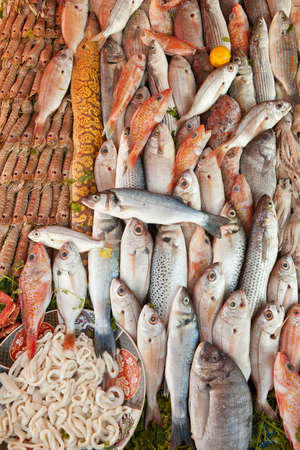 Fresh seafood and fish background lot of species