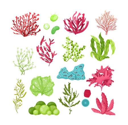 Underwater marine flora set. Marine aquarium flora, aqua plants, coral reef underwater seaweed ocean plants phytoplankton, algae, laminaria, sea moss tropical sea plant underwater painting vector Vektorgrafik