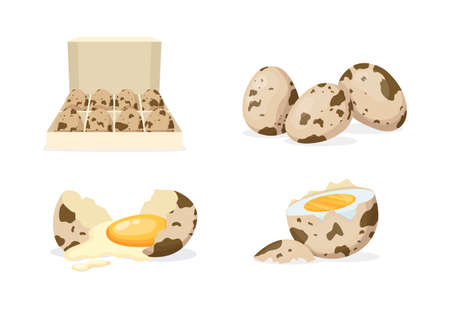 Fresh and boiled eggs. Quail broken eggs with cracked eggshell and yolks, in cardboard box, egg half with yolk, boiled and fried. Cooking ingredient. Healthy organic food farm product vector Ilustração