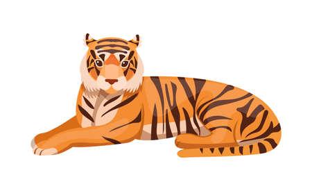 Woodland forest animals. Adult big tiger wildlife Ussurian tiger cartoon flat vector