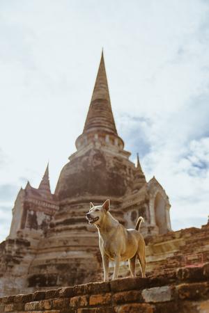 stray: A dog guarding a Thai temple