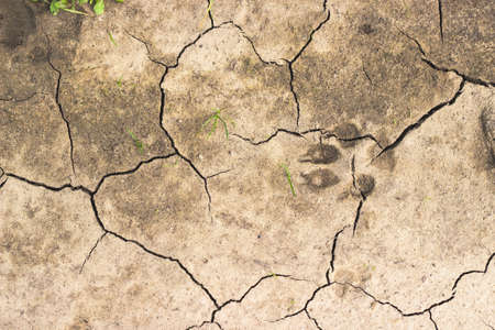 torrid: Chapped ground with dog track and few blades of grass. Global warming concept. Texture background