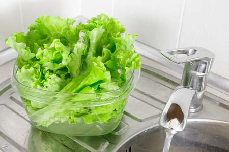 Fresh lettuce leaves soaked in transparent plastic bowl to remove pesticides residues, prepare for cooking. Healthy organic vegetable food, diet concept Stock Photo