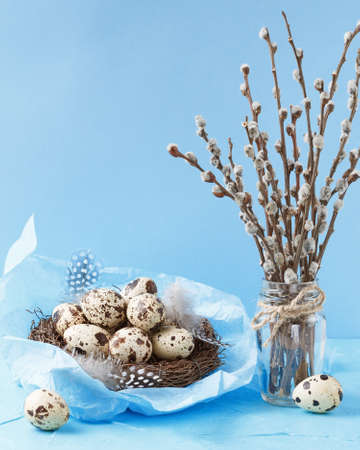 Quail eggs in the nest with feathers and pussy willow over blue background, space for text