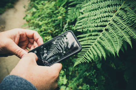 Man hands taking photo of green fern leaf in the forest, bracken plant mobile phone photography Imagens