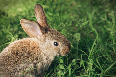 A grey rabbit sitting in the grass. Easter greeting card