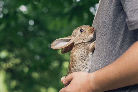 Man is holding tiny little bunny on his tommy