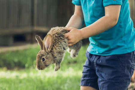 Little boy is holding a bunny. Animal is trying to escape. Vacation at the farm