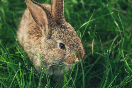 A grey rabbit sitting in the grass. Easter card