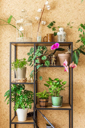 Stylish industrial open shelf cupboard filled with a lot of beautiful plants in different design pots over the brown wall. Concept of home gardening and urban jungle interior Stock Photo