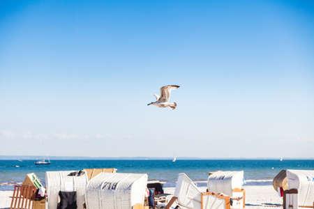 Eine M�we fliegt �ber einem Strand an der Ostsee