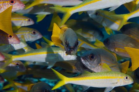 a lot of fish, one fish looked to you Stock Photo - 6682016