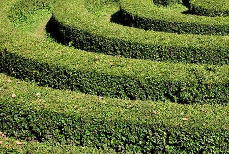 形の植物は、園芸の芸術です。それは、エレガントな形状、特に緑の図形を与えます。