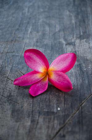 Plumeria on wood photo
