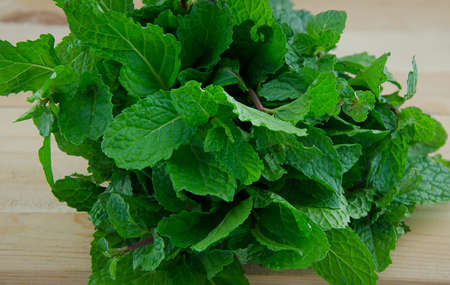 medicinal herb: mint aromatic plants and medicinal herb