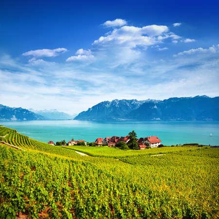 Weinberge am Genfer See in Lavaux, Schweiz