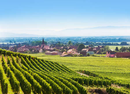 Aerial view to Alsace fruit valley at Kaysersberg and Colmar area with Kientzheim village in the background Stock Photo