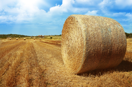 hayroll: hayroll on meadow against blue sky background Stock Photo