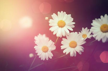 bokeh background: Vintage natural flower on pink bokeh background