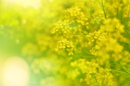 Blurry abstract nature background bokeh yellow flowers