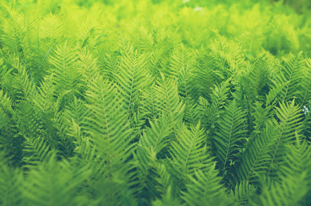 fores shrubs green fern background vintage style