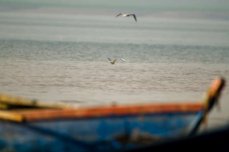 Two gulls are hovering on a lake and a boat is lying 版權商用圖片