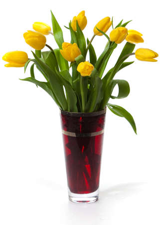 Bouquet of yellow tulips in a red glass vase on a white background. photo