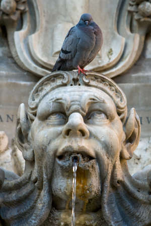 Pigeon sitting on a sculpture. Fountain on the Piazza della Rotonda in Rome. Detail photo