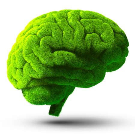 人間の脳は野生、自然なまたは不完全な知性のメタファー分離影と白い背景の上の緑の草で覆われて