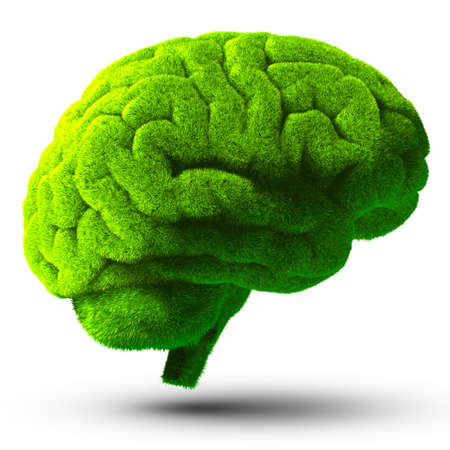 intelligence: The human brain is covered with green grass  The metaphor of the wild, natural or imperfect intelligence  Isolated on white background with shadow