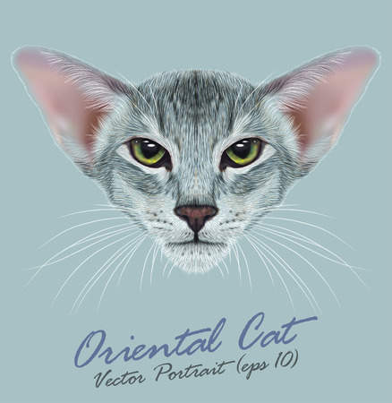 tabby: Vector Portrait of Oriental Cat. Very beautiful domestic cat tabby coat print with green eyes. Illustration