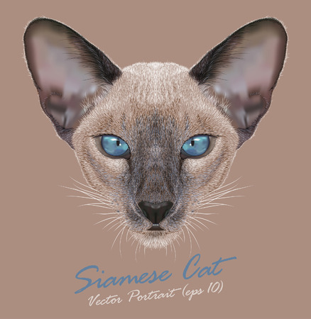 Vector Portrait of a Siamese cat. Cute Siamese kitten. Blue point.