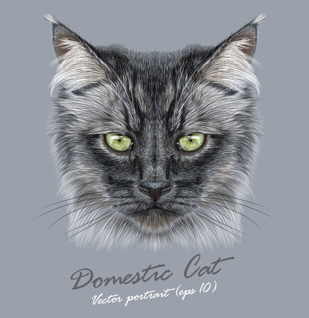 Vector Portrait of Black Domestic Cat. Stern face of a cat with yellow eyes.
