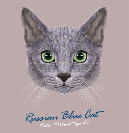 Vector Portrait of Domestic Cat. Russian Blue Cat. Cute young cat with green eyes