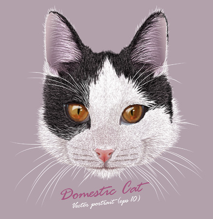 Vector Portrait of Young Domestic Cat. Bi-color cat with eyes the color of copper. Cute pet.