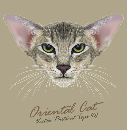 green eyes: Vector Portrait of Oriental Cat. Very beautiful domestic cat tabby coat print with green eyes. Illustration