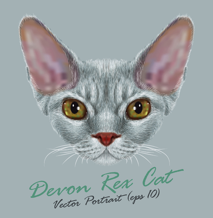 grey cat: Vector Portrait of Devon Rex Cat. Cute young grey domestic cat with green eyes.