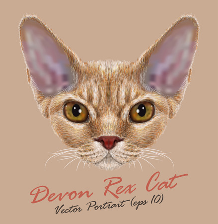 gazing: Vector Portrait of Devon Rex Cat. Cute young orange domestic cat