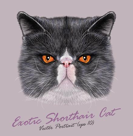 エキゾチックな短い髪猫の肖像画。オレンジ色の目でかわいいバイカラーのペルシャ猫。