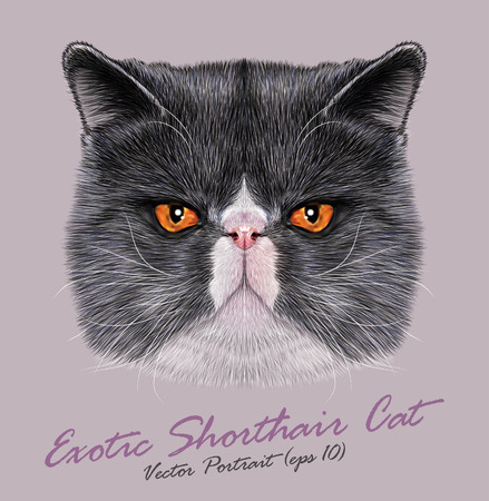 이국적인 쇼트 헤어 고양이의 초상화입니다. 오렌지 눈을 가진 귀여운 이중 색상 페르시아 고양이.