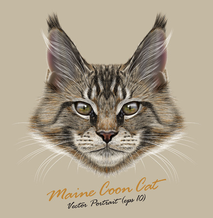 Vector portrait of Maine Coon Cats. Young cute kitten.