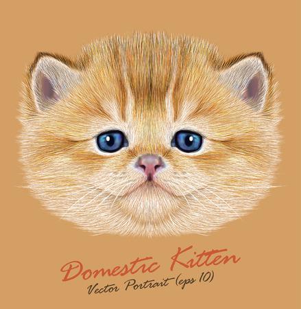Vector Portrait of Domestic Kitten. Cute peach kitten with blue eyes.