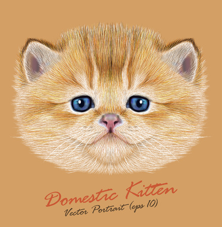 Vector Portrait of Domestic Kitten. Cute peach kitten with blue eyes.