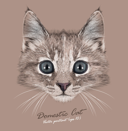 Vector Portrait of Domestic Kitten. Cute tortoise colour kitten female. Illustration